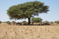 Burkina-2.1